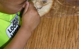 Food Experiment: Growing Mold in the Classroom