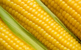 Corn: So Much to get Steamed About!